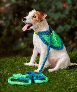 Flashy Dog Leash & Bandana