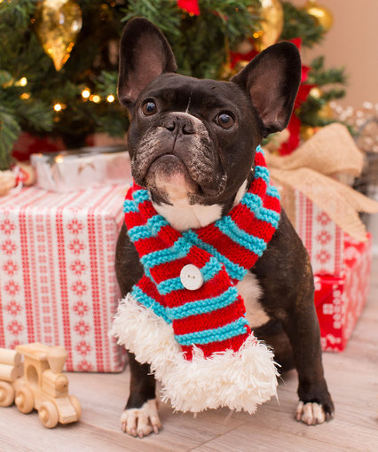 Knitting Patterns Galore Stylish Pet Scarf