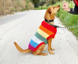 Rainbow Dog Jumper