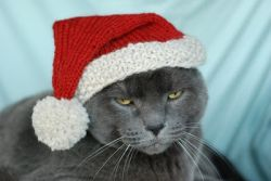 International Cat Hat: North Pole