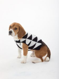 Modernist Dog Sweater