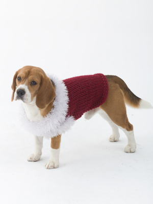 ae86bbcb50e Knitting Patterns Galore - The Celebrator Dog Sweater